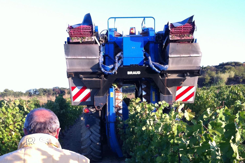 ぶどうの収穫〈手摘みと機械摘み〉